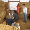 Bldg 2: straw bale raising workparty with Girl Scouts